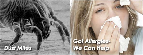 Dust Mites & Allergens